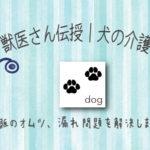 獣医が考えた!犬の介護に役立つオムツの使い方