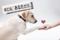 愛犬の骨折再手術|整形外科の名医を獣医から紹介され、下半身不随から軌跡が!